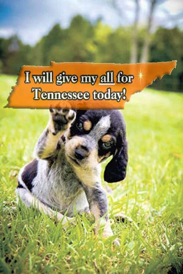 Blue Tick Hound Dogs Puppies Cute Animals Cute Dogs