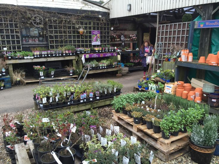 Emporium Maldon gets it's plant sales going. March 2015. Random lady walked into the shot.