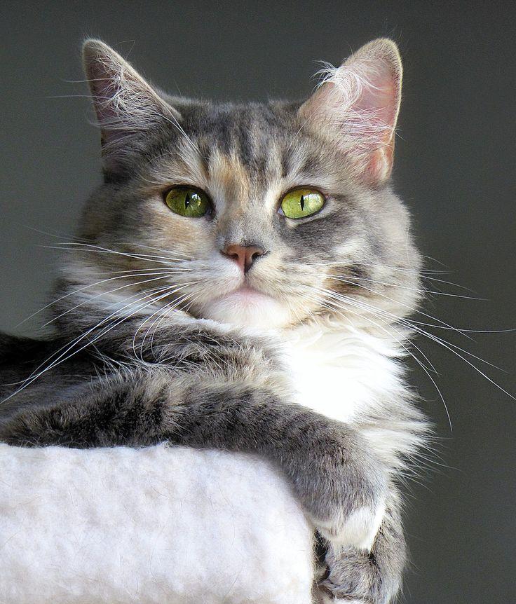 America's Next Top Model - Feline Edition :)
