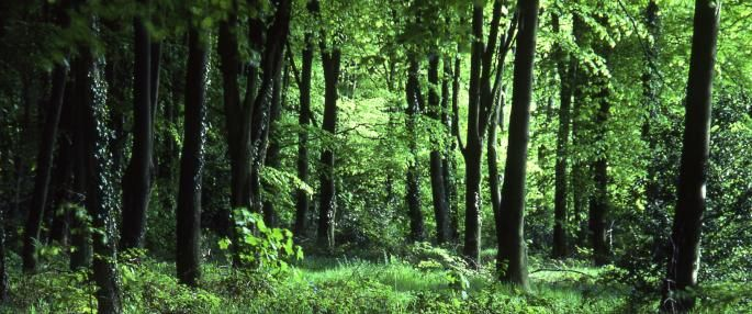 woodland forest habitat second grade | FORESTS HAVE KEY ROLE TO ...