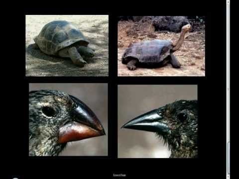Seventh Grade Science / Evolution 4.4 Variation