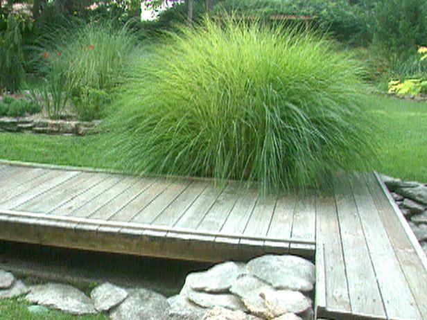 72 best ornamental grass images on pinterest for Tall grass landscape ideas