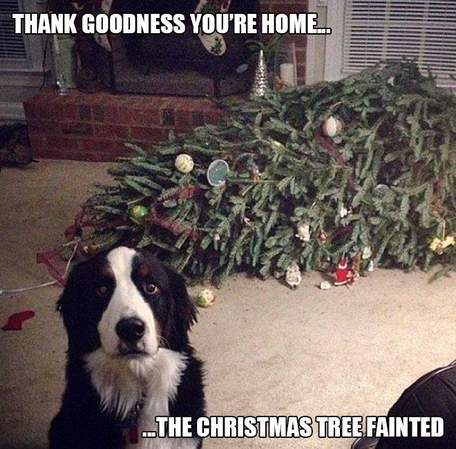 the christmas tree fainted