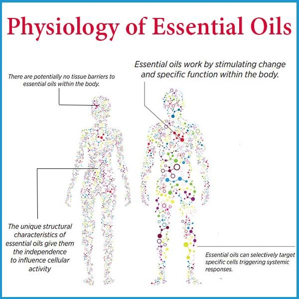 """At dōTERRA, we often refer to essential oils as """"gifts of the Earth."""" However, when viewed through a scientific perspective, the explanation behind their biological activity becomes easily understood. One can simply say that essential oils are physiologically active, or in other words, essential oils work by stimulating change and specific function within the body."""