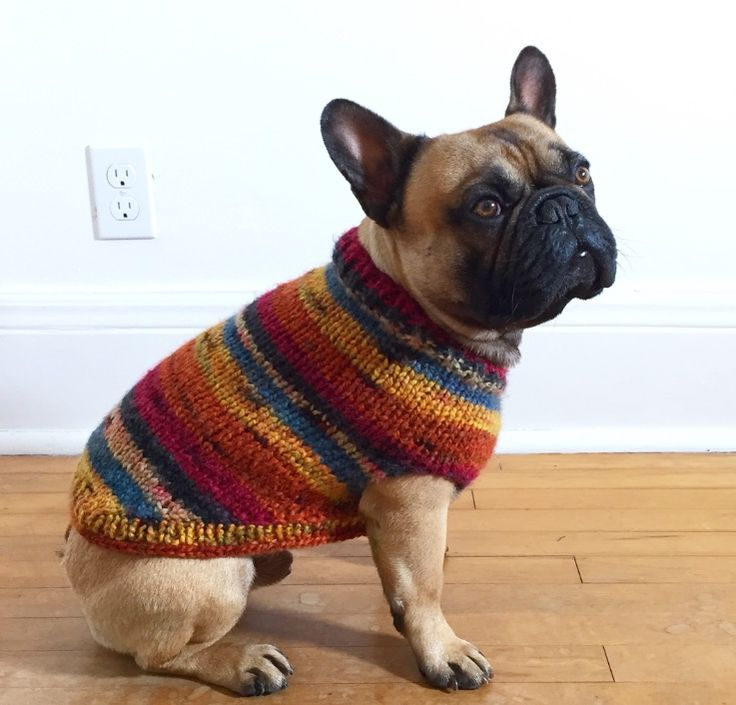 Frankie looks so handsome in his new fall sweater !