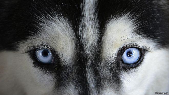 Часто бывает так, что владельцы собак не могут объяснить, почему определенные люди вызывают у их питомцев настороженность. Некоторые делают поспешный вывод, что животное, должно быть, немного капризное. Однако...