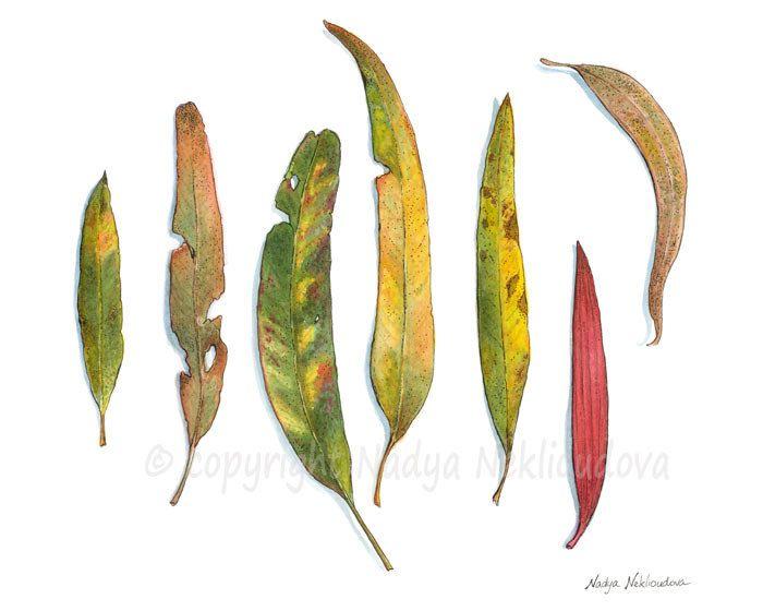 Eucalyptus Leaves painting ORIGINAL Watercolour Pen by oceloteyes. $75.00, via Etsy.