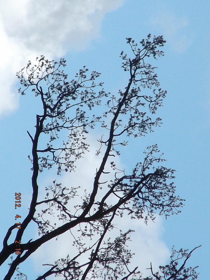 Tree from a distance. (zoomed in.)