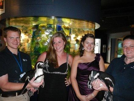 Penguins!!!! Mystic Aquarium