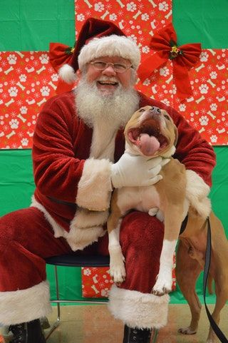 OHMY GOD!!!!! This is one of the cutest pictures I've ever seen!!!! Look at that pitbull smile... I bet Santa told him he was a good boy