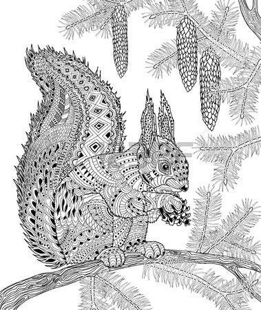 Coloriage anti stress ecureuil - Coloriage d ecureuil ...