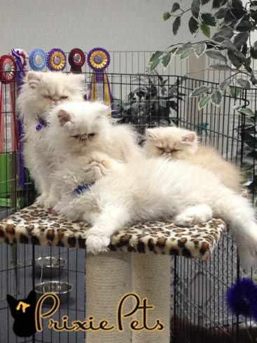 Best Way To Prevent Knots In Cat Fur