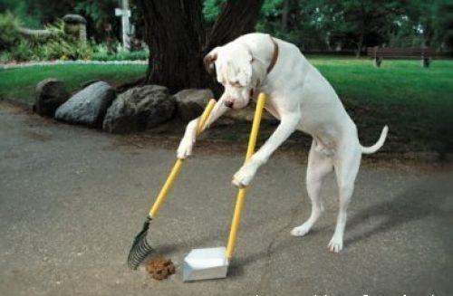 Google Image Result for http://www.aaanything.net/wp-content/gallery/funniest-animals-of-2010/thumbs/thumbs_funny_dog_cleaning.jpg
