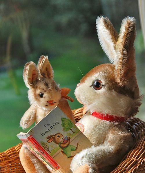 Steiff rabbits.