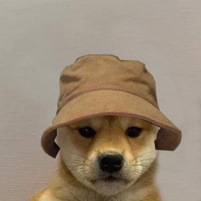 Its Me Dog Icon Dog Images Animal Memes