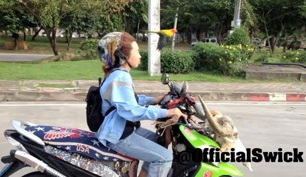 Bird Hitches A Ride With Crazy Scooter Lady – Video