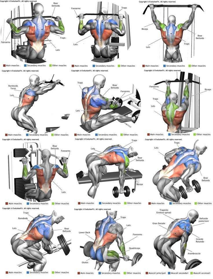 Which exercises for which muscles? Training for muscle groups