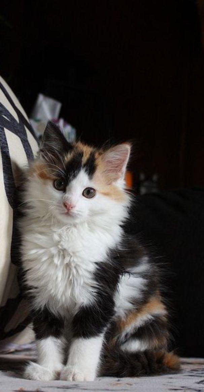 Pin Di Geeth Gowda Su Kittens Kittens Kittens Gattini Piccoli Gattini Adorabili Gattini