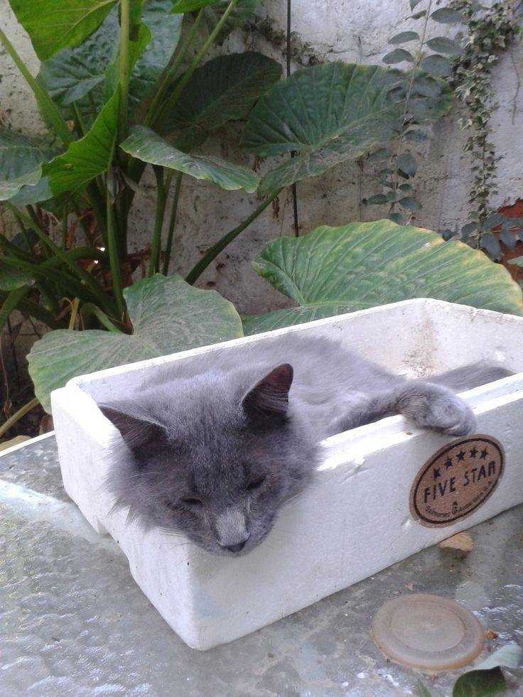 Gato Marcianito!