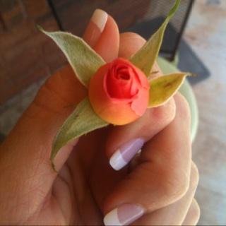 Sweet, little rosebud <3