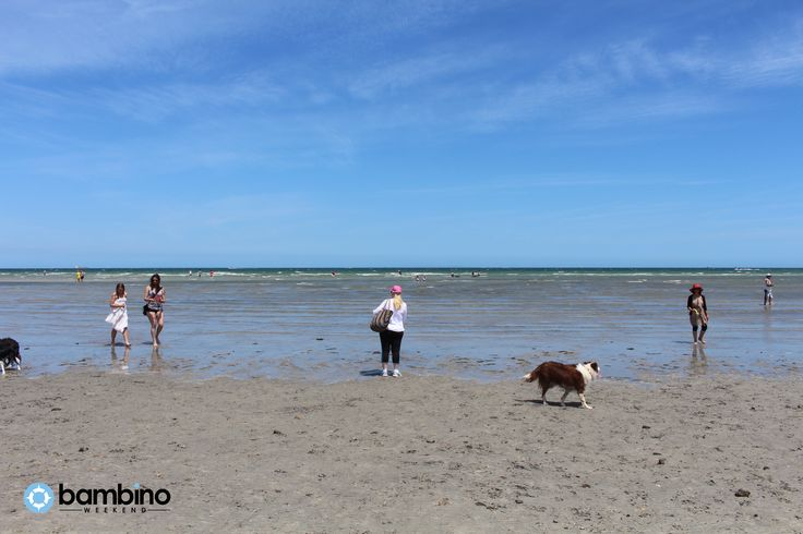 Altona Dog Beach, Altona