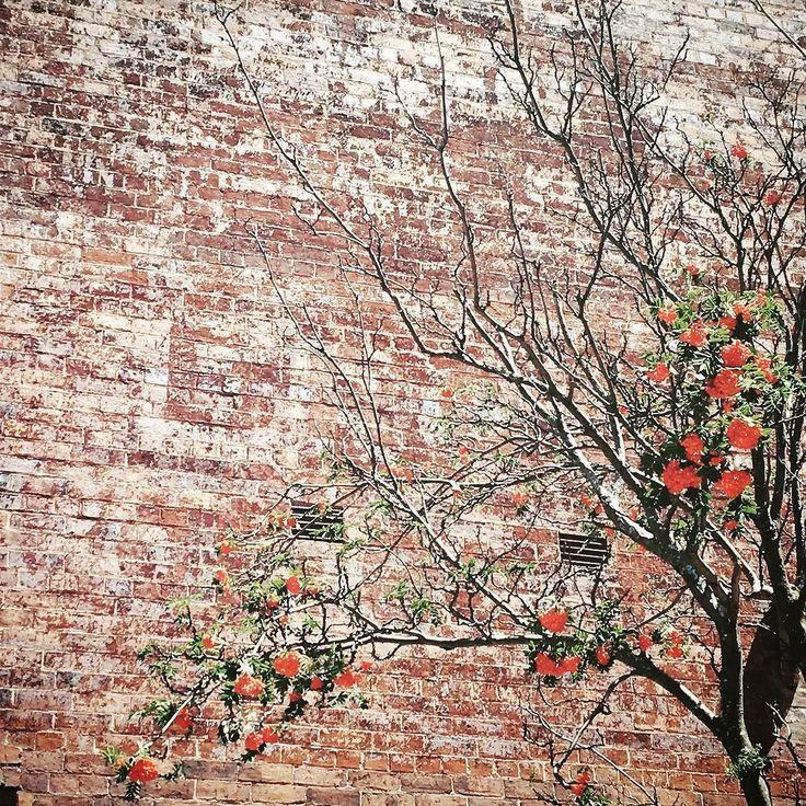 Texture   #texture #wall #fruit #launceston #brick #urban