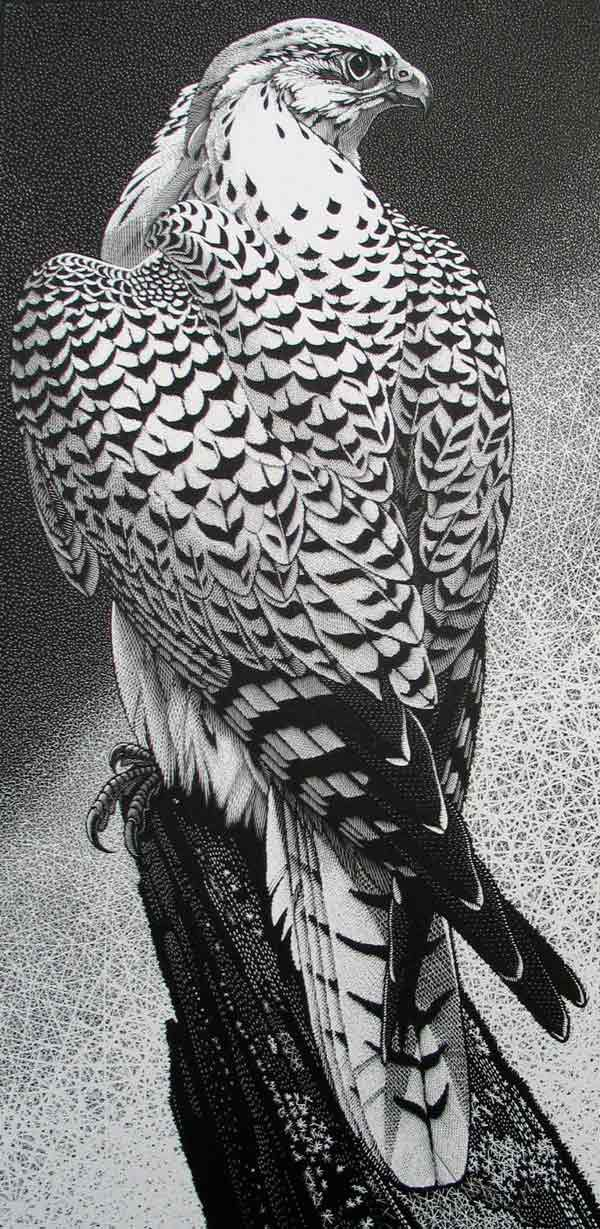 Gyr Falcon ~ Wood Engraving ~ Colin See-Paynton ~ The Wildlife Art Gallery