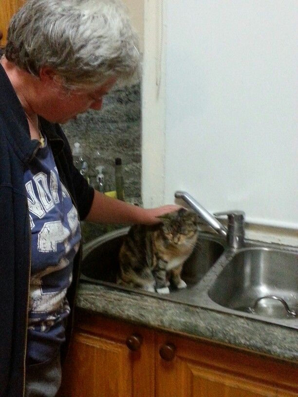 When it's really cold she likes to sit in the sink after we've done the dishes. Nice and warm :-)