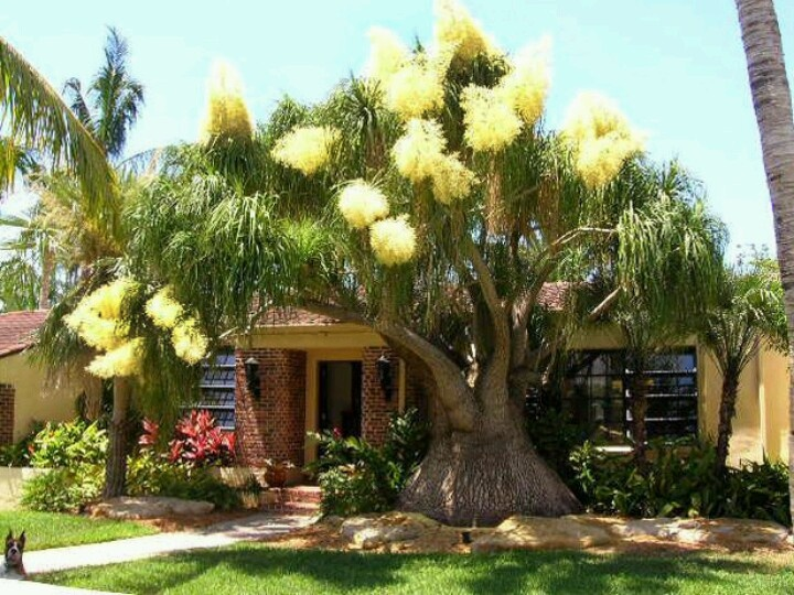 date palm care instructions