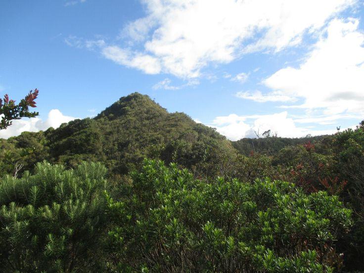 #Bosque #Alto #humedo
