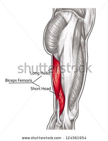 Shin 20Splints together with India Femoro Popliteal Bypass Surgery as well 2603712261351680 furthermore Shin Splints Info 6 as well Physiotherapist And Knee Pain. on inside of knee pain