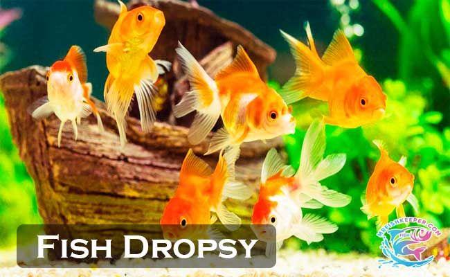 Pin By Mrfishkeeper On Mrfishkeeper Fish Prevention Pet Store