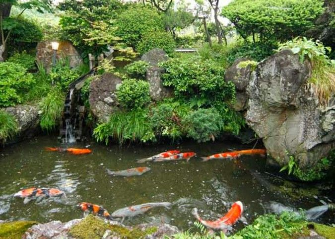 27 best fish pond builder malaysia images on pinterest for Koi pond design malaysia