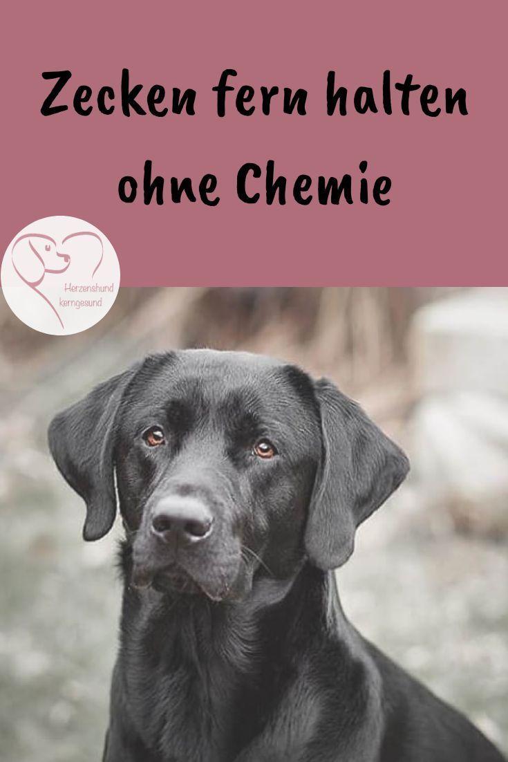 Schwarzkümmelöl Hund Dosierung