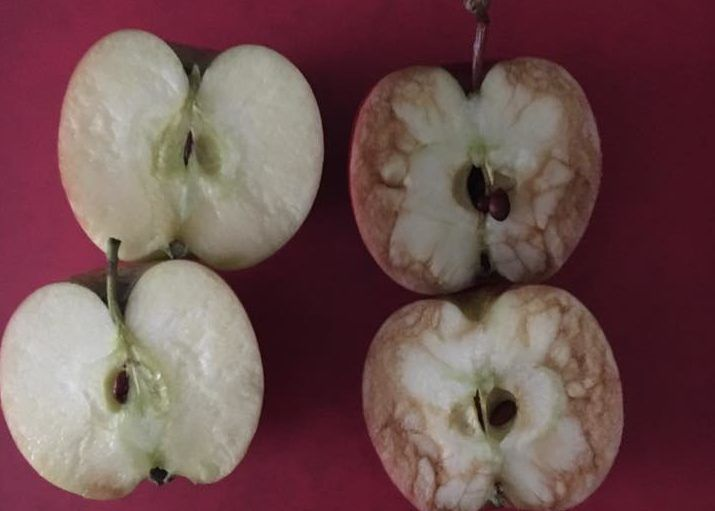 I'm sure we've all seen the inside of an apple when it starts to get discolored and brown, whether it's from bruising or exposure to the air. Well, last week, a teacher in the UK used two apples to teach her students about bullying—and how much our core (no pun