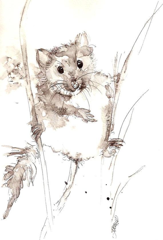 Harvest Mouse original pen & wash