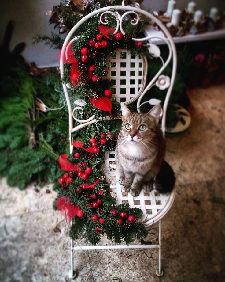 "1 aprecieri, 1 comentarii - Floraria Dorothy's (@florariadorothys) pe Instagram: ""Winter chair.. #grigore #catintheflowershop #clujcats #catsofcluj #napocats #cluj #clujnapoca…"""