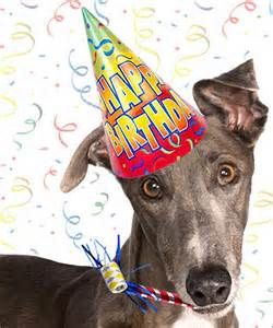Kk 195 Happy Birthday Greyhound Happy Birthday Katy