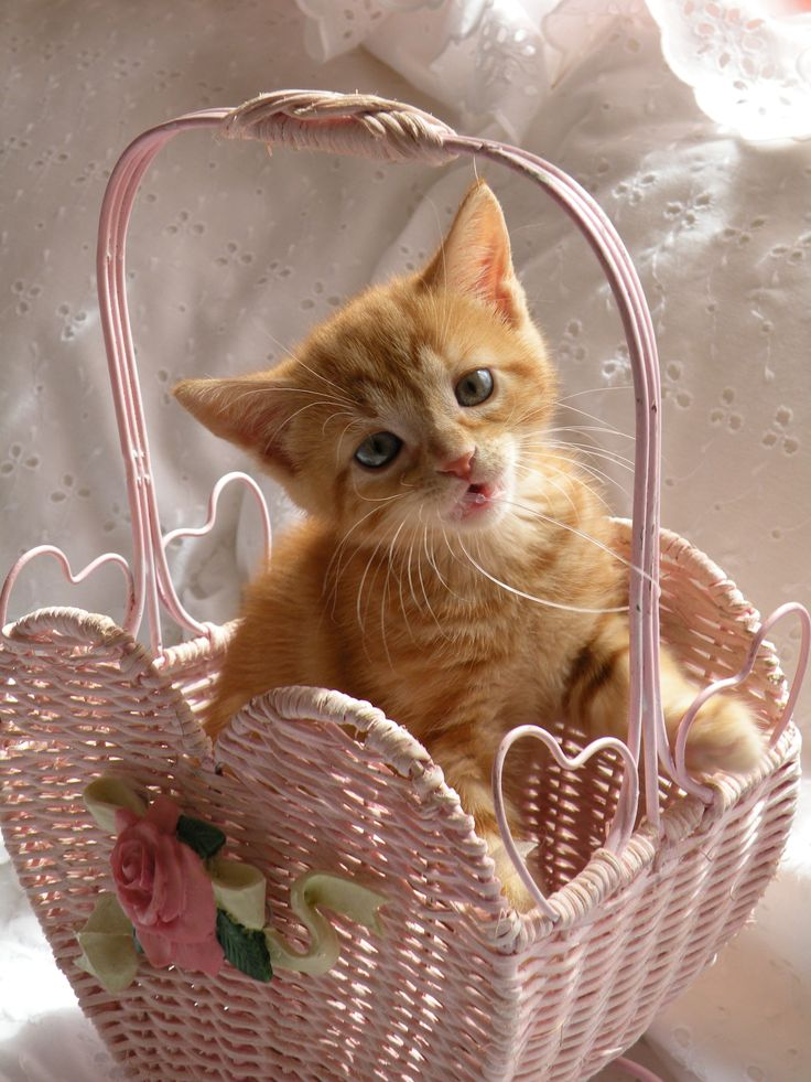 Basket of Love!