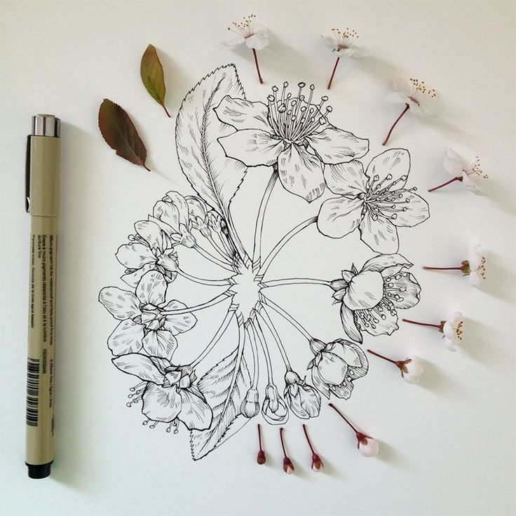 Scientific illustrator and artist Noel Badges Pugh tantalizing drawings of buds and blooms.