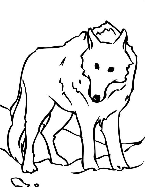Arctic Wolf Coloring Pages Design