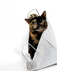 10 Essential Cat Travel Accessories - HowStuffWorks