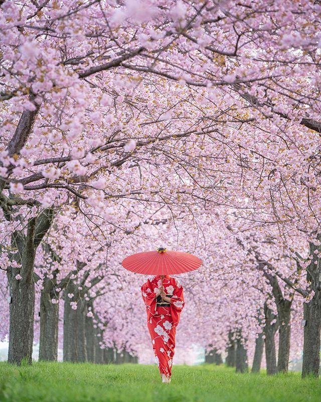 Instagram Aesthetic Japan Cherry Blossom Girl Blossom Trees