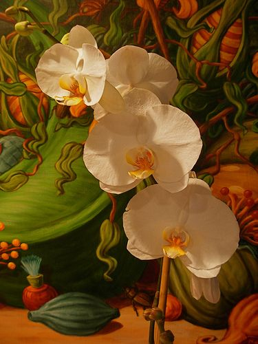 White Orchids | Flickr - Photo Sharing!