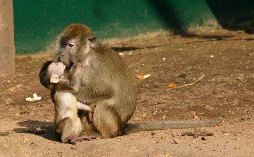 Amor Madre e Hijo