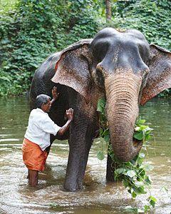 Lakshmi the elephant at Serenity - bathing