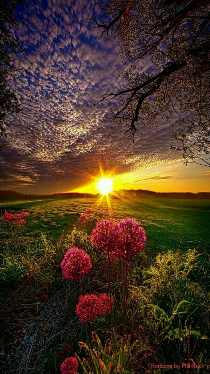 красивая природа рассвет картинки положении