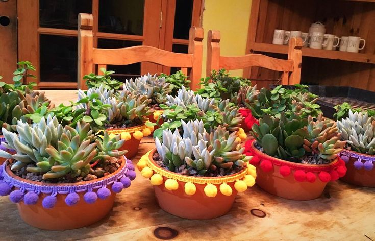 Mexican Fiesta Succulents Centerpieces