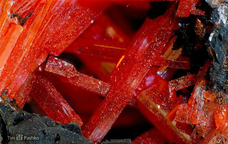 Друза крокоита на гетите (лимоните). рудник Аделаида, о. Тасмания, Австралия. Размер: 57х42х39 мм.
