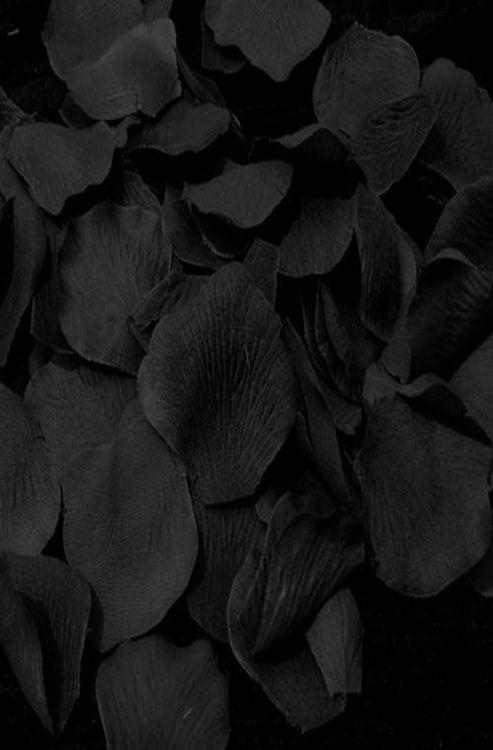 Black | 黒 | Kuro | Nero | Noir | Preto | Ebony | Sable | Onyx | Charcoal | Obsidian | Jet | Raven | Color | Texture | Pattern | Styling | Petals | Collection | Pile
